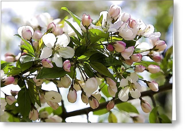 Defining Spring 3 Greeting Card by Joanna Madloch