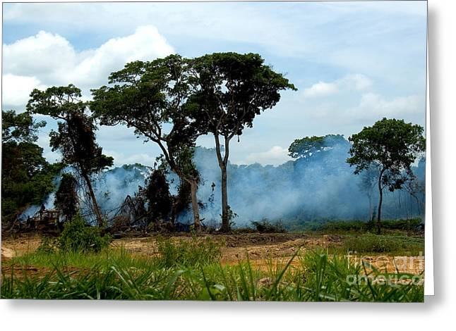 Deforestation Greeting Cards - Deforestation In The Pantanal, Brazil Greeting Card by Gregory G. Dimijian, M.D.