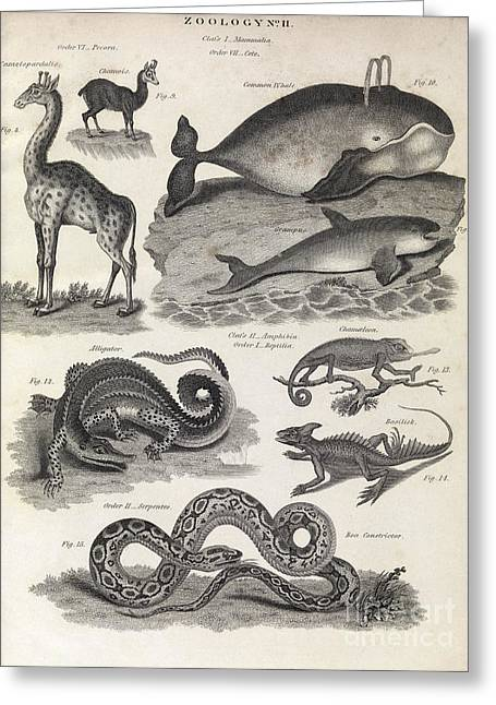 Taxon Greeting Cards - Defunct Linnaean Taxonomy, 1823 Greeting Card by Middle Temple Library