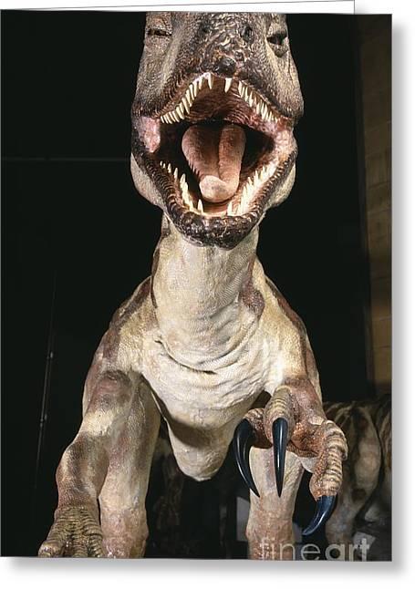Deinonychus Greeting Cards - Deinonychus Dinosaur, Museum Model Greeting Card by Natural History Museum, London