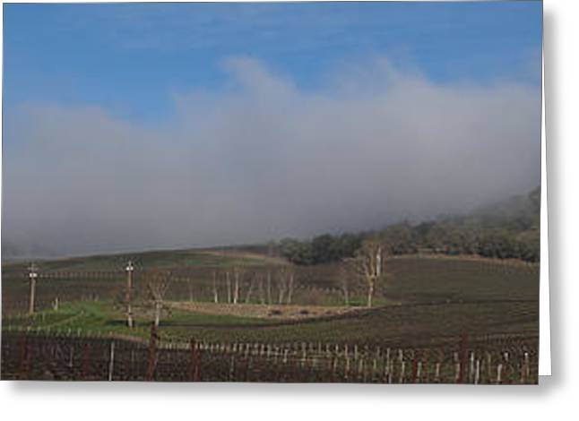 Blue Grapes Greeting Cards - Del Rio Vineyards Panoramic Greeting Card by Mick Anderson