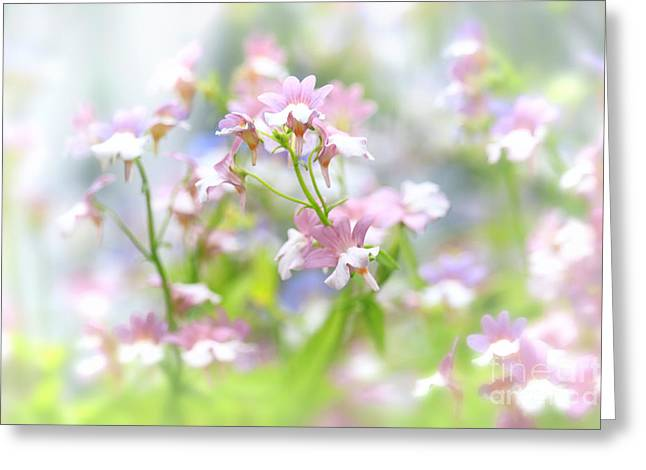 Lobelia Greeting Cards - Delicate Beauty Greeting Card by Charline Xia