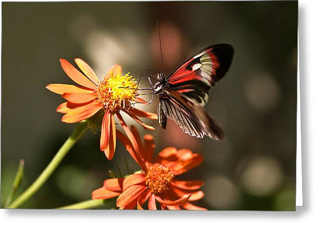 Delicate Beauty Greeting Card by Michael Rucci