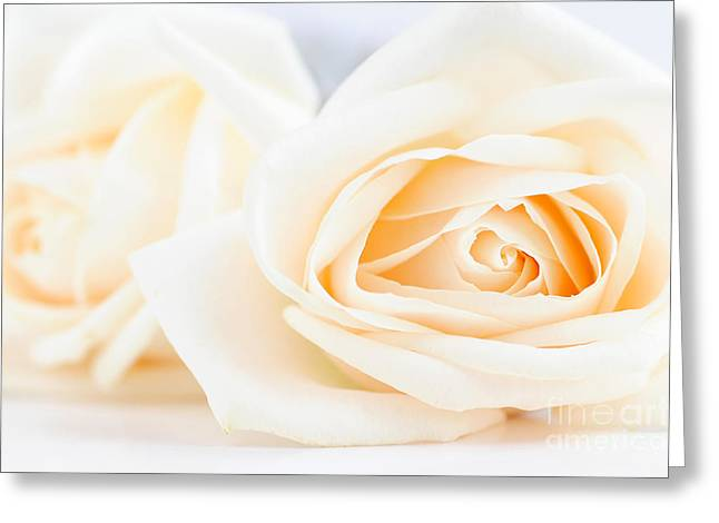 Tenderness Greeting Cards - Delicate beige roses Greeting Card by Elena Elisseeva