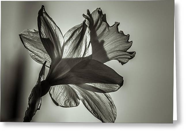 Plantlife Greeting Cards - Delicate Greeting Card by Chris Fletcher