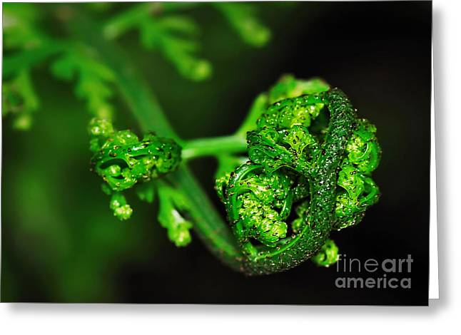 Delicate Fern Unfolding Greeting Card by Kaye Menner