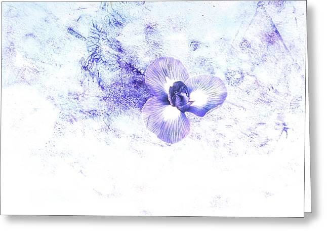 Ann Powell Art Greeting Cards - Delicate Flower in Blue  Greeting Card by Ann Powell