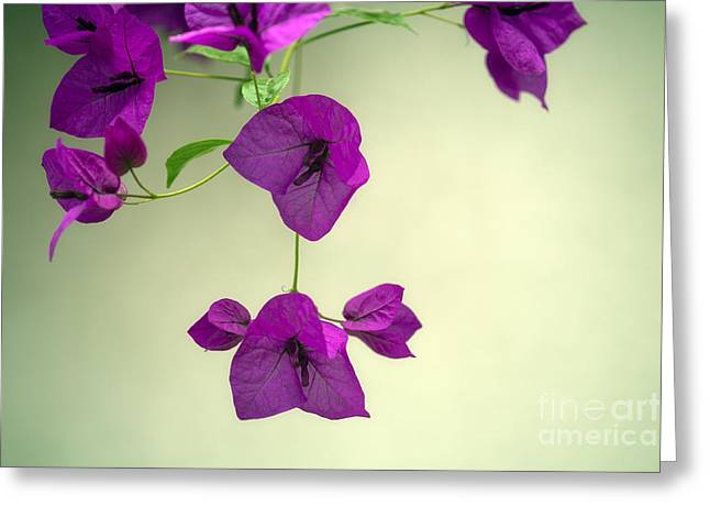 Delicate Flowers Pretty in Pink Greeting Card by Natalie Kinnear