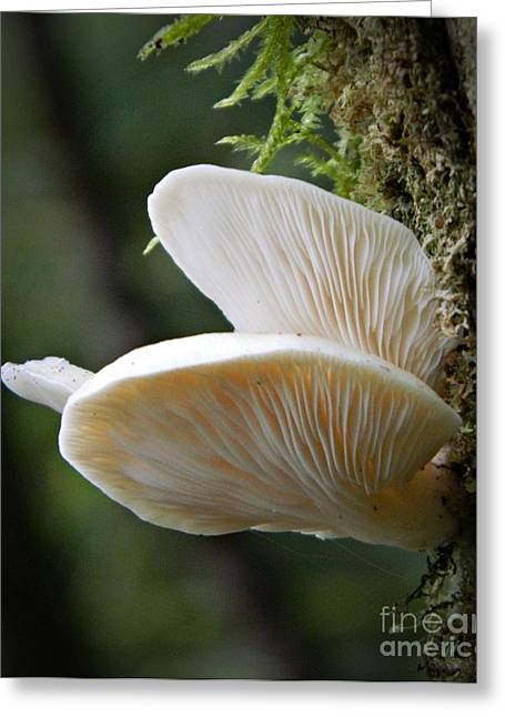 Neurotic Images Photography Greeting Cards - Delicate Fungus Greeting Card by Chalet Roome-Rigdon