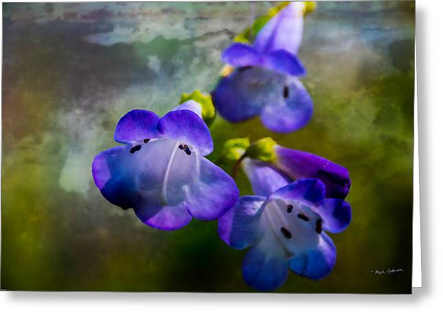 Mick Anderson Greeting Cards - Delicate Garden Beauty Greeting Card by Mick Anderson