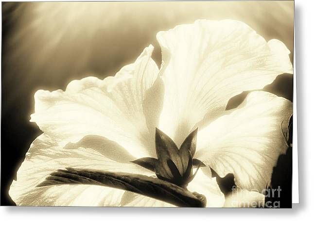 Fineartphotography Greeting Cards - Delicate Hawaiian Hibiscus  Greeting Card by Gerlinde Keating - Keating Associates Inc