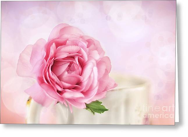 Florescence Greeting Cards - Delicate II Greeting Card by Darren Fisher
