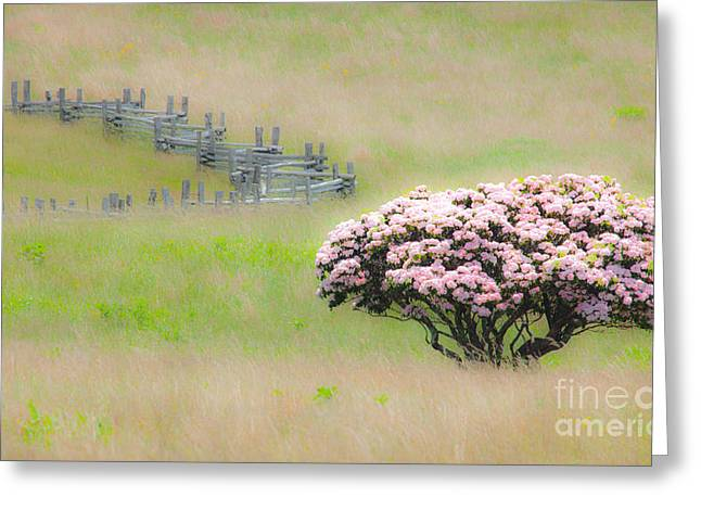 Surreal Landscape Greeting Cards - Delicate Meadow - a Tranquil Moments Landscape Greeting Card by Dan Carmichael