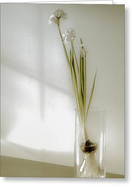 Glass Vase Greeting Cards - Delicate Paperwhites Greeting Card by Julie Palencia