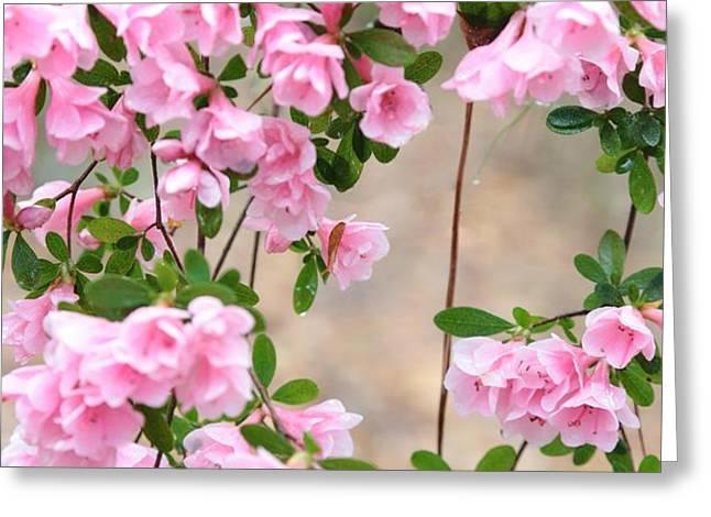 Delicate Pink Azaleas Greeting Card by Carol Groenen