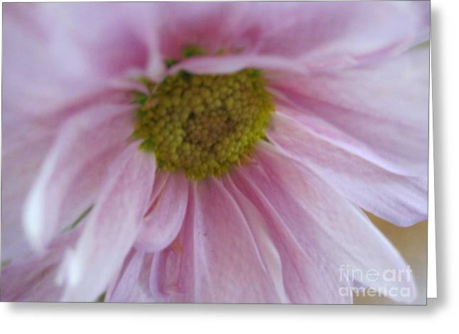 Texture Floral Drawings Greeting Cards - Delicate Pink Greeting Card by Tara  Shalton
