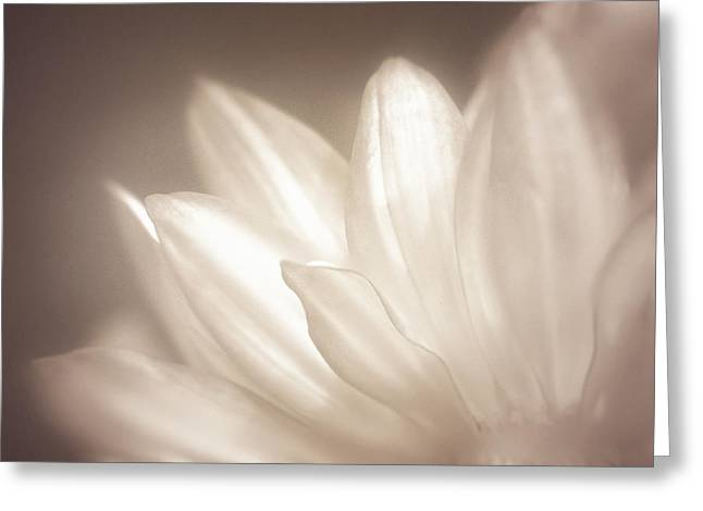 Delicate Greeting Card by Scott Norris