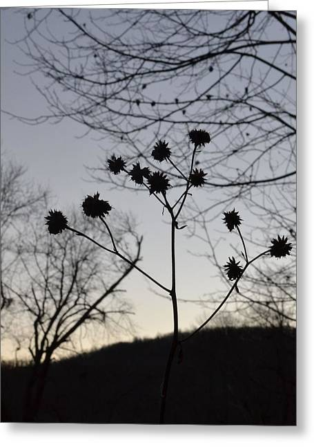 Delicate Silhouette Greeting Card by Carlee Ojeda