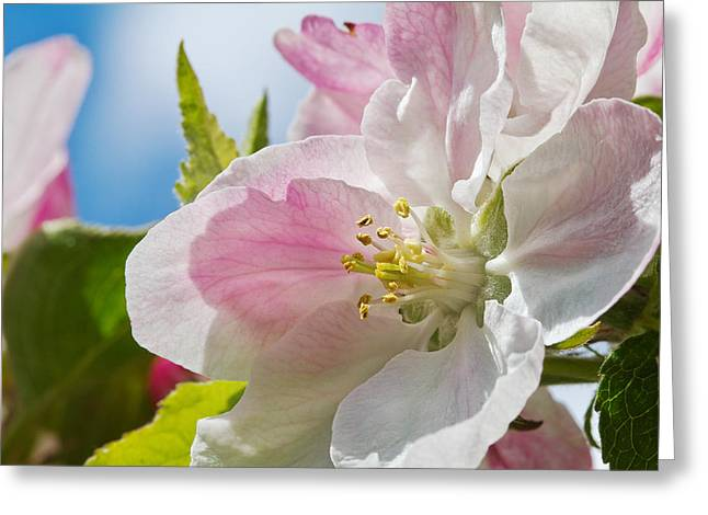 Delicate Spring Blossom Greeting Card by Mr Bennett Kent