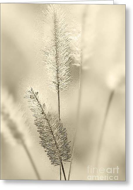 Delicate Sweetgrass Greeting Card by Heiko Koehrer-Wagner