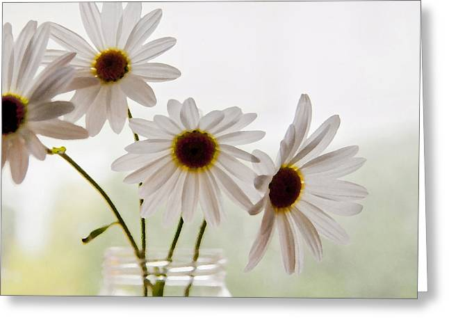 Windowlights Greeting Cards - Delicate Greeting Card by Terri Harper