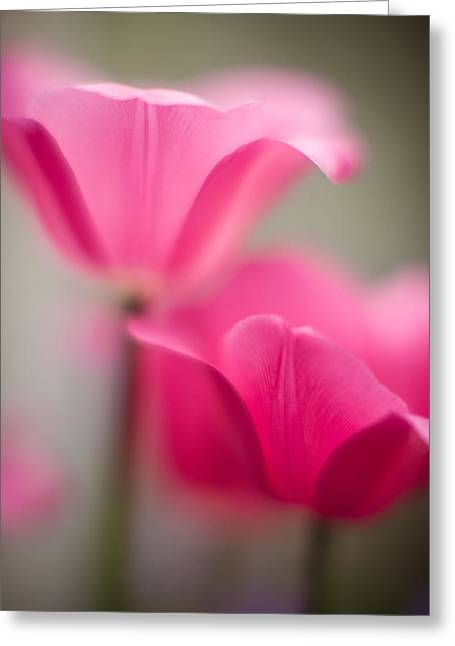 Delicate Tulip Curves Greeting Card by Mike Reid