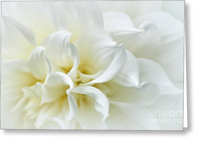 Rhythmic Greeting Cards - Delicate White Softness Greeting Card by Kaye Menner