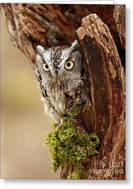 Delighted By The Eastern Screech Owl Greeting Card by Inspired Nature Photography Fine Art Photography