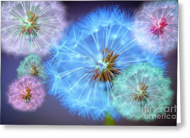 Macro Greeting Cards - Delightful Dandelions Greeting Card by Donald Davis