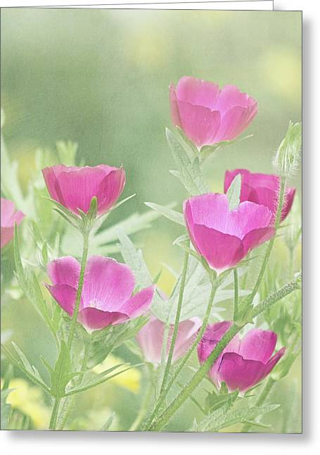 Flowers In California Greeting Cards - Delightful Greeting Card by Kim Hojnacki