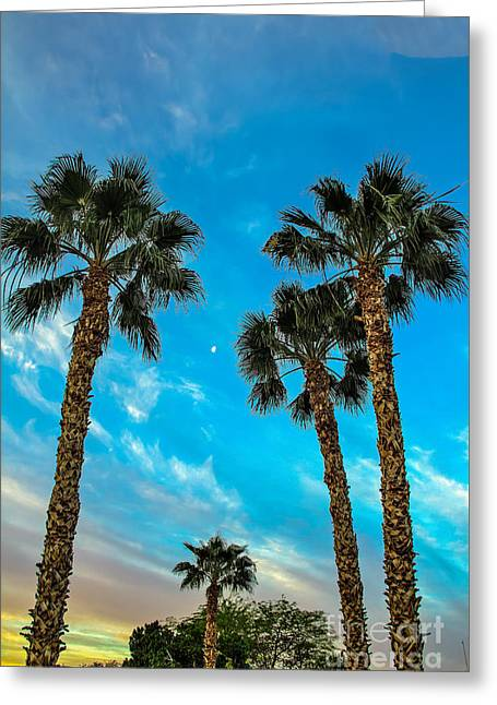 Delightful Morning Greeting Card by Robert Bales