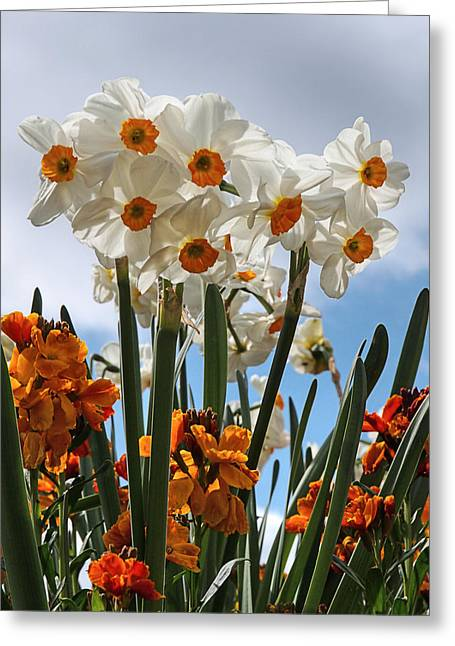 Wallflower Greeting Cards - Delights Of Spring Greeting Card by Gill Billington