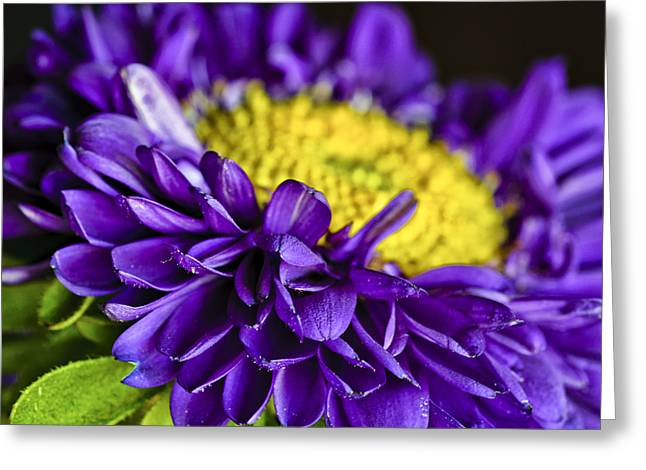Asters Greeting Cards - Delights the Eye Greeting Card by Christi Kraft