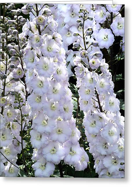 Delphinium Greeting Cards - Delphinium Cascade. Greeting Card by Terence Davis