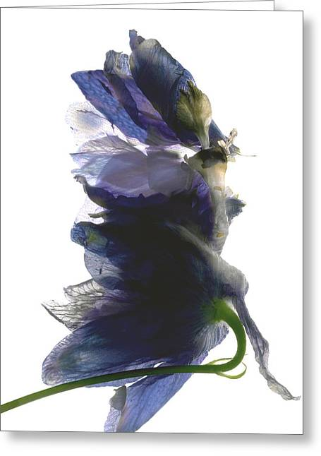 Tasteful Digital Art Greeting Cards - Delphinium Dance Greeting Card by Julia McLemore