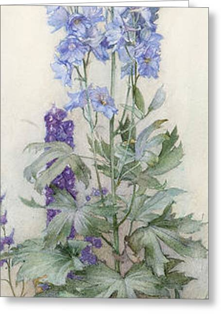 Delphinium Greeting Cards - Delphiniums Greeting Card by James Valentine Jelley