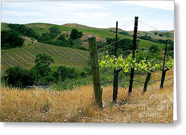 Table Wine Greeting Cards - Demertia Vineyard  Greeting Card by Maureen J Haldeman