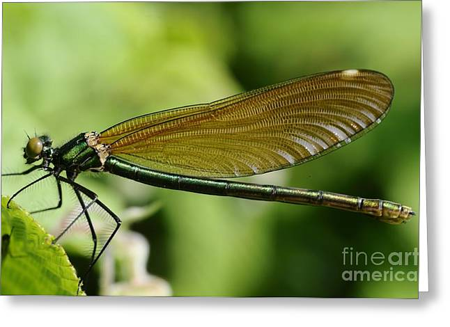 Demoiselle Greeting Card by Jenny Potter