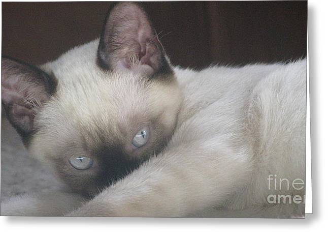 Siamese Cat Greeting Card Greeting Cards - Demure Greeting Card by Pamela Benham