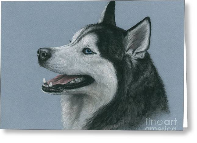 Husky Pastels Greeting Cards - Denali Greeting Card by Laurie Klein