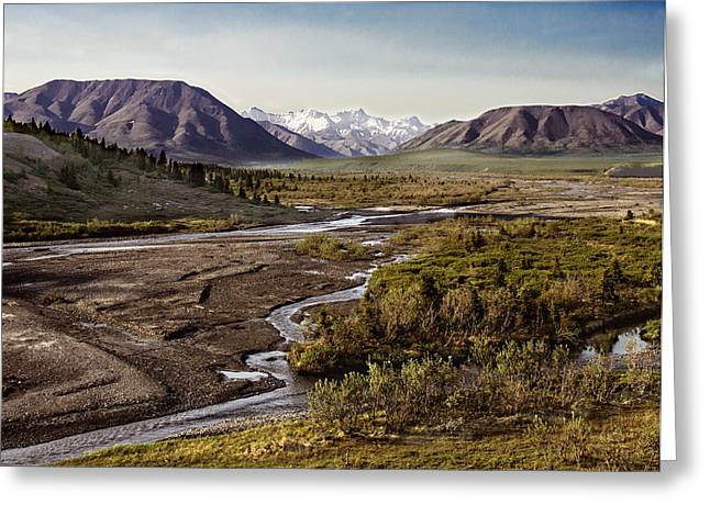 Snow Tree Prints Greeting Cards - Denali Toklat River Greeting Card by Penny Lisowski