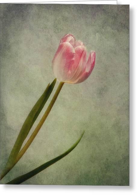 Springflowers Greeting Cards - Denise Greeting Card by Claudia Moeckel