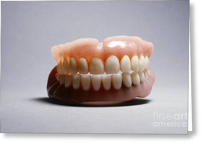 Prosthetic Greeting Cards - Dentures Greeting Card by Tierbild Okapia