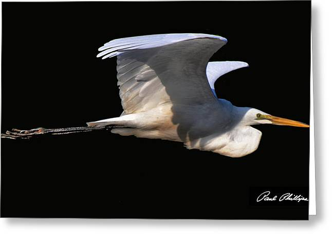 Egret Greeting Cards - Departure Greeting Card by Paul Lyndon Phillips