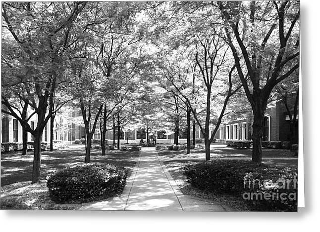 Richardson Greeting Cards - DePaul University Richardson Library Courtyard Greeting Card by University Icons
