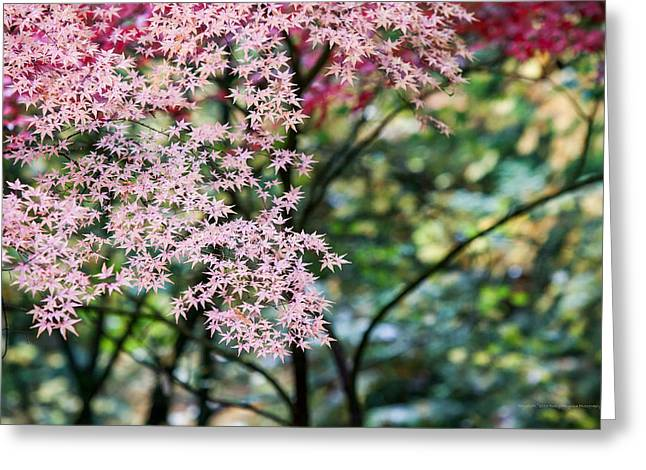 Htc Greeting Cards - Depth of Fall Greeting Card by Rusty Muyuela