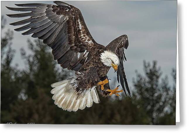 Courson Greeting Cards - Descending Eagle Greeting Card by CR  Courson