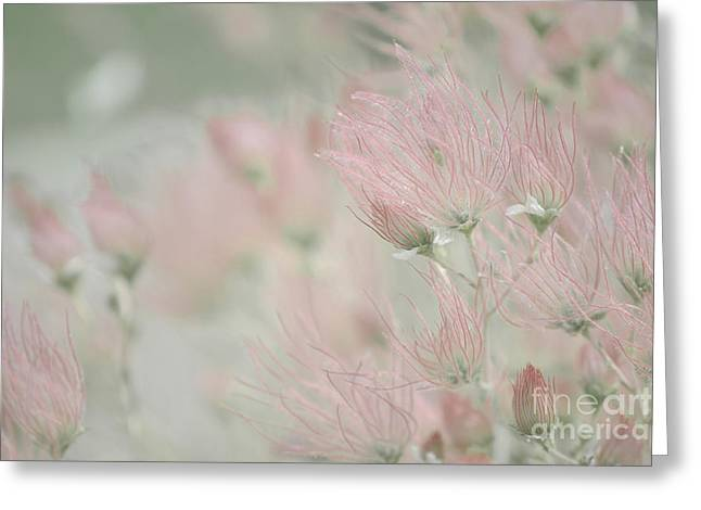 Desert Greeting Cards Greeting Cards - Desert Apache Plume Greeting Card by Andrea Hazel Ihlefeld