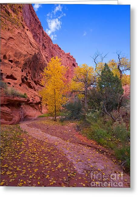Burr Greeting Cards - Desert Autumn Greeting Card by Mike  Dawson