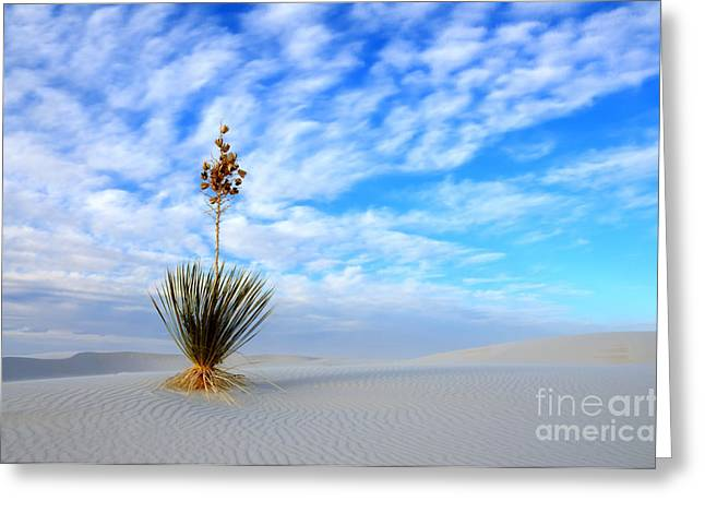 Desert Beauty White Sands New Mexico Greeting Card by Bob Christopher